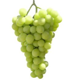 perlette-grapes