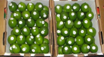 Shipping limes for importing